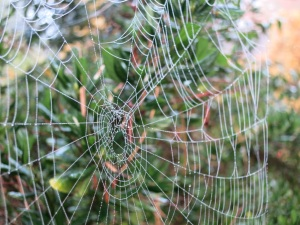 secret-garden-dew-on-web