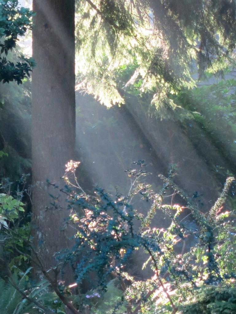 secret-garden-inspiration