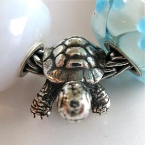 paddy-tortoise