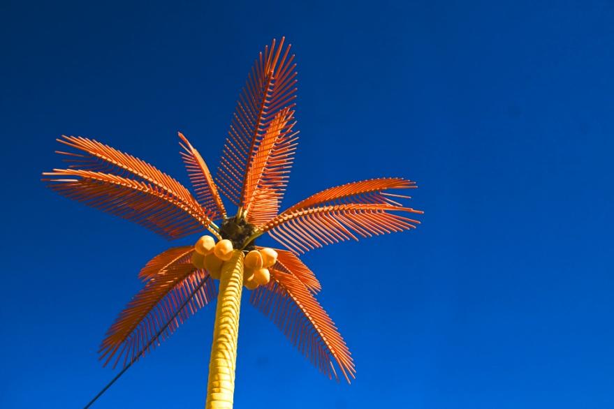 palm-tree-20x30